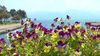 Lila und gelbe Blumen und das Meer