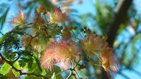 Zacht roze bloemen op een groene boom
