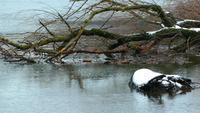 Droge boomtak en meerwater in de winter