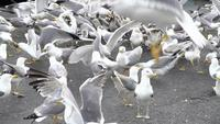 Flock of Seagulls On The Ground