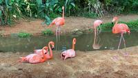 Família Flamingo relaxante à beira da lagoa.