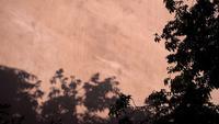 Árboles y sombras de las ramas en la pared