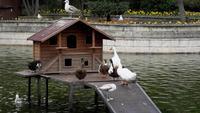 Patos y gaviotas en el parque Yildiz