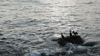 Les grands cormorans se reposent sur un rocher à la plage
