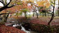 De herfstgebladerte in Nara-park Japan