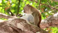 Macaco comendo comida na árvore
