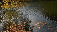 Geel Autumn Leaves op Water
