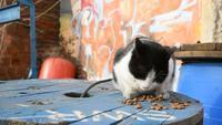 Streunende Katze isst trockenes Katzenfutter im Freien