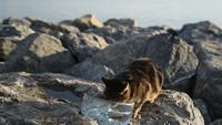 Süße Katze trinkt Wasser draußen auf den Felsen