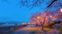Schöne Dämmerung und Sakura in Japan