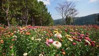 Flor de paja de hierba