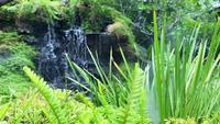 Waterfall with Mist and Tropical Fern Moss Garden