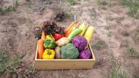 Gemüsekisten werden auf landwirtschaftlichen Flächen aufgestellt.