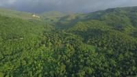 Luchtfoto van het drone van groene lente bos vanaf de top