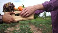 Bonde höjer olika grönsakslådor levererade till kunder