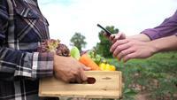 O cliente usa um smartphone para verificar vegetais orgânicos em uma fazenda.