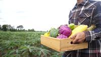Ung asiatisk bonde som rymmer en ask med organiska grönsaker