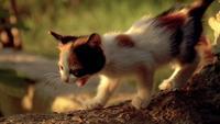 Minúsculo gatinho multicolorido andando em câmera lenta