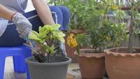 Cerrar mujer jardinería