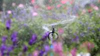 Water sprinkler sprays flowers