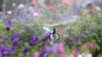 Water sprinkler sprays flowers