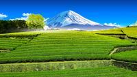 Theeplantage aan de achterkant met uitzicht op de berg Fuji.