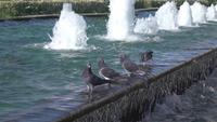 Pombos em pé na fonte