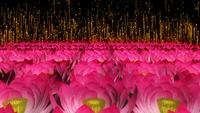 Lotus Field Particles