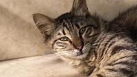Chat tigré repose sur les escaliers à l'extérieur