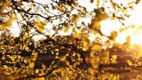 Bladeren in het avondzonlicht
