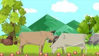 Les vaches paissent dans la plaine