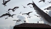 Seagulls are Flying in Slow Motion at The Sky