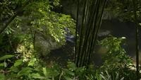 Beautiful Scenery of A Small Waterfall in The Jungle