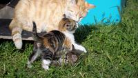Adorables chatons et maman chat en 4k