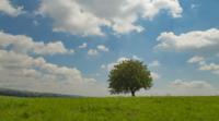 Árvore no prado verde em Lessinia