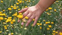 Young woman running her hands through flowers field