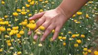 Jeune femme, courant, elle, mains, travers, champ fleurs