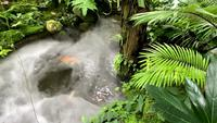 Tropisk regnskogsträdgård med dimma över bäcken