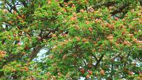 Flores de otoño Raintree