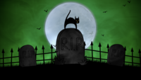 A Cat on The Cemetery