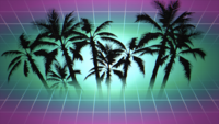 Framed Palm Trees