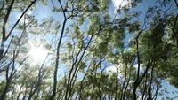 Boombladeren en takken bewegen met de wind