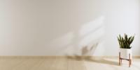 Lichte kamer met witte muur, houten vloer en een plant