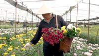 The worker with basket of flowers checks product in farm
