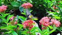 Mariposa en jardín de flores