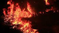 Fuego salvaje en el bosque.