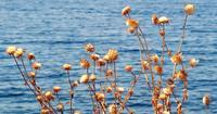 Havsutsikt bakom Thorn Island Plant
