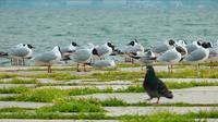 Tauben und Möwen