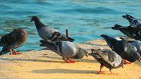 Tauben in der Nähe des Meeres