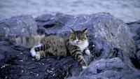 Hermoso gato atigrado está tendido sobre rocas